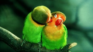 two birds itching kissing eyes